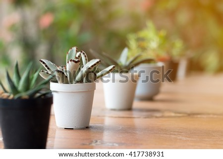 Soft focus of Succulents or cactus in pot on wooden board. - stock photo