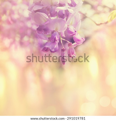 Soft focus on blooming wisteria in pastel tones with abstract background - stock photo