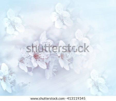 Soft focus on flowering branch - blooming branch - stock photo