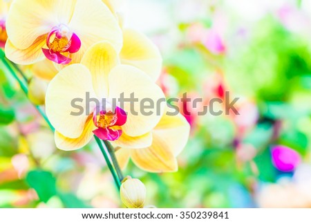 Soft focus on Orchid flower