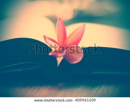 soft focus open old book page and pink flower in blurred background with vintage color tone effect filter, romantic background with retro filter effect, vintage still life - stock photo