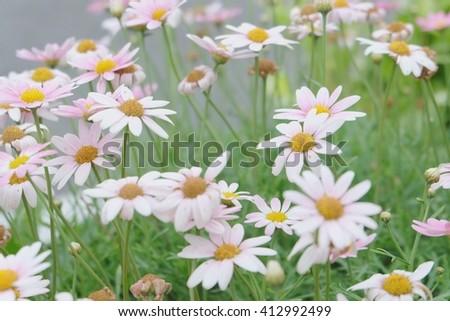 Soft focus pink flower, blur backgroud - stock photo