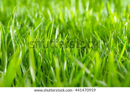 Soft focus, shallow DOF close up photo of green grass in morning - stock photo
