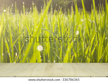 soft focus wooden table with blur,bokeh The dew on leaves of rice in in rice field - stock photo