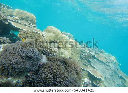 Soft focused photo of bauetiful coral at Horse shoes island ,Andaman ocean,Myanmar,Asia