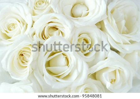 Soft full blown white roses as a background - stock photo