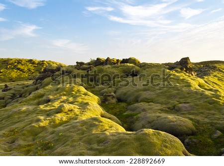 Soft Iceland moss covering the volcanic stones - stock photo