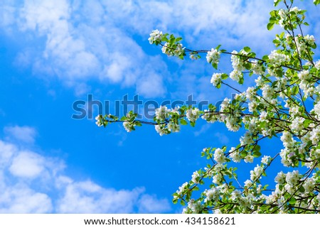 Soft image of a blossoming tree - stock photo