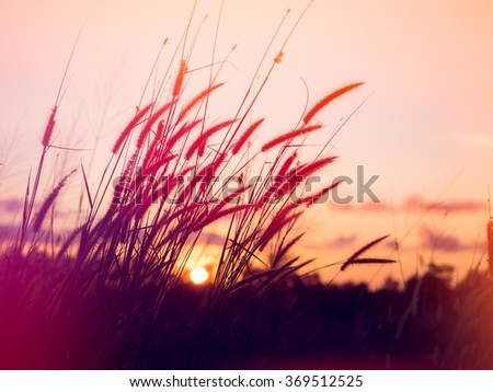 soft light tone, Abstract meadow  background with grass in the meadow and sunset, Vintage Warm tones - stock photo