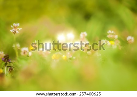 Soft macro picture of wildflowers vintage style - stock photo