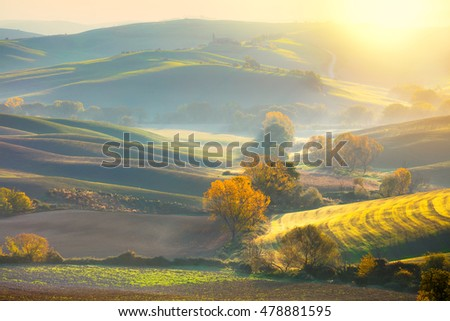 Soft Morning Autumn landscape -  fall season - Golden Trees in Wavy fields at sunrise, Tuscany, Italy, Europe