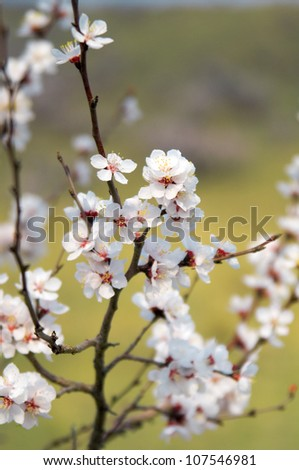 Soft photo of White-pink cherry blossom. Bokeh - stock photo