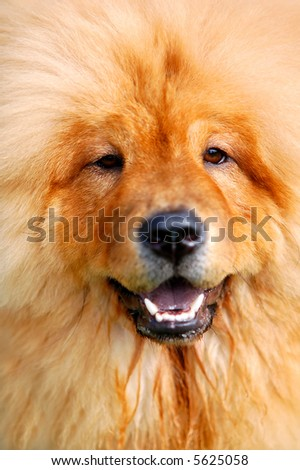 Soft portrait of beautiful dog