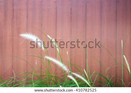 soft red wooden wall Grass in front  - stock photo