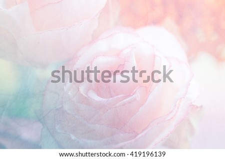 Soft rose background made with color filters, unfocused