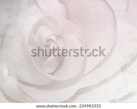 Soft rose pattern - white pink flower background - stock photo