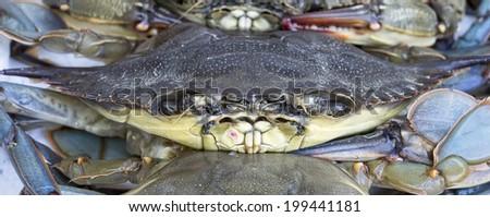 Soft shell Maryland blue crab at seafood market. - stock photo
