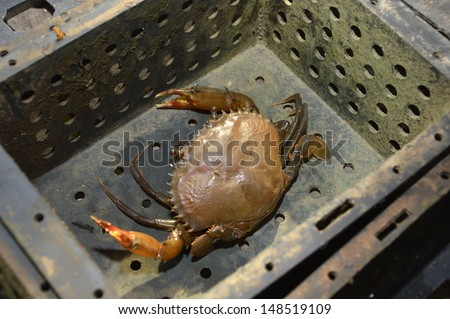 soft shelled crabs on black box - stock photo