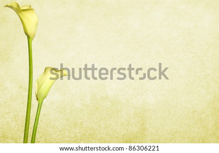 Soft textured old paper background with yellow flowers. Copy-space. - stock photo