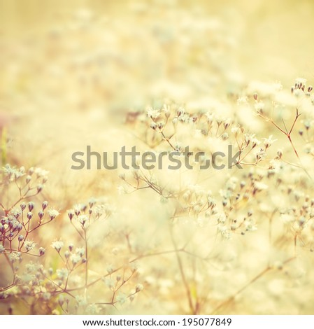 Soft toned flowers - stock photo