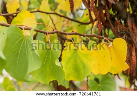 Soft view of multicolored leaves on tree.Fall nature.