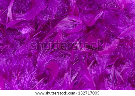 soft violet feathers, background - stock photo