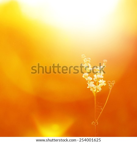 soft wide meadow white vintage flower in field on yellow sunny background - stock photo
