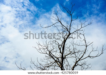 softlight from sunshine , Naked branches of a tree against blue sky close up
