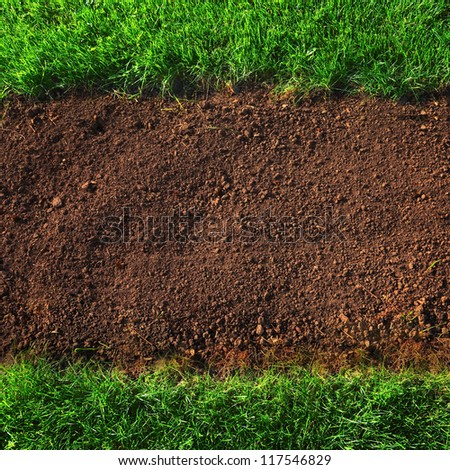 soil and grass background closeup