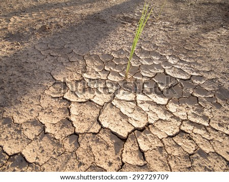 Soil cracks desert sands water evaporation stagnation and global warming large cracks in clay soil due to water evaporation