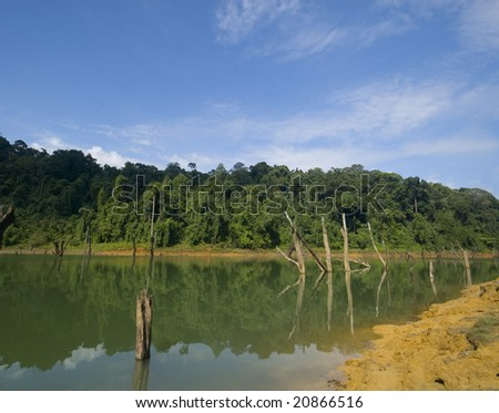 Soil erosion and dead branches on calm lake. - stock photo
