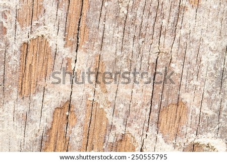 Soil from termite eaten wood wall old until disintegrated