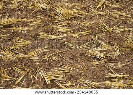Soil in Barn - stock photo