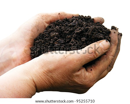 Soil in woman arms isolated - stock photo