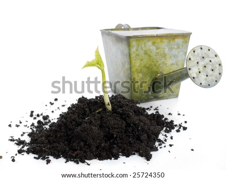 Soil mold with growing bean sprout and watering can in the background - shot isolated on white