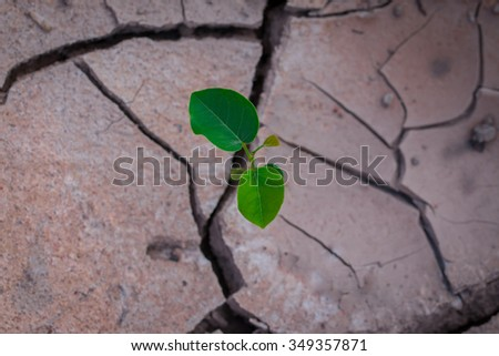 Soil,Plant,Crack,Global Warming,Plant in dried cracked mud. - stock photo