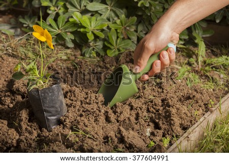 Soil,Planting,Seeding,Seedling,Close up  hand planting flower - stock photo