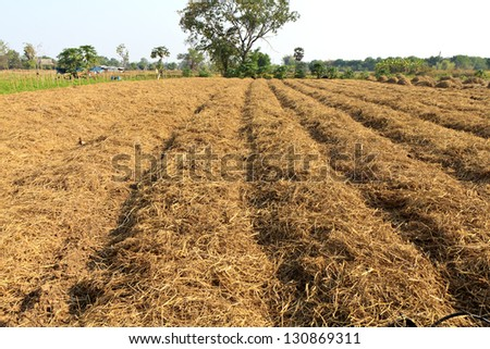 soil preparation land for vegetable cultivation farm in Thailand