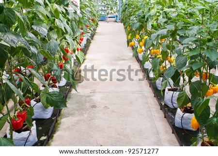 Soilless plantation technique - stock photo