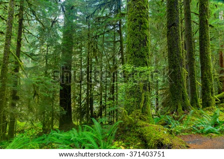 Sol Duc rainforest at Olympic National Park, Oregon Coast - stock photo