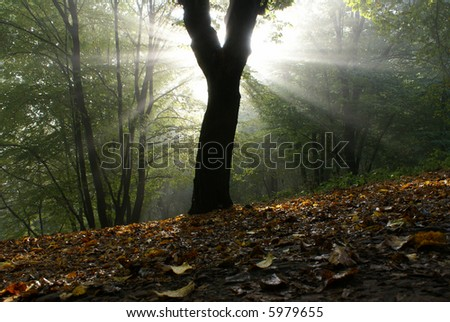 Solar beams making the way through a fog - stock photo