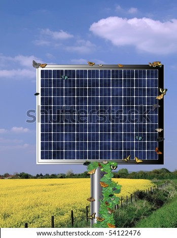 Solar cell beside rapeseed oil field with wild butterflies covering.