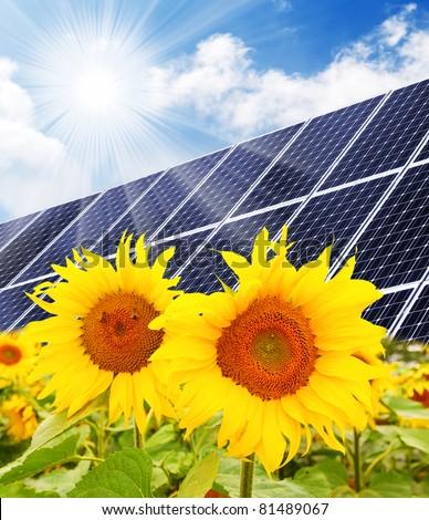 Solar energy panels on a sunflower field against sunny sky. - stock photo