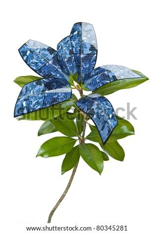 Solar panel plant, on white. Evolution of the leaf. - stock photo
