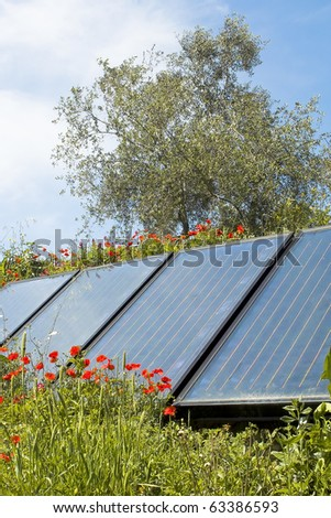solar panels between tulips and olive in the garden - stock photo