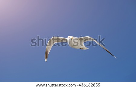 Sole seagull flying in a clear blue sky  - stock photo