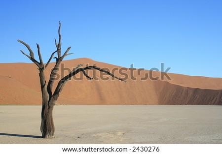 Sole Tree Dead Vlei, Namibia - stock photo