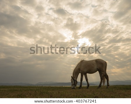 solitary horse feeding on grass, cloudy sky and natural ray background