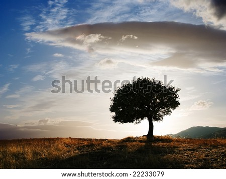 solitary oak tree at twilight - stock photo