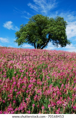 Solitary oak tree in a field of bright pink flowers - stock photo